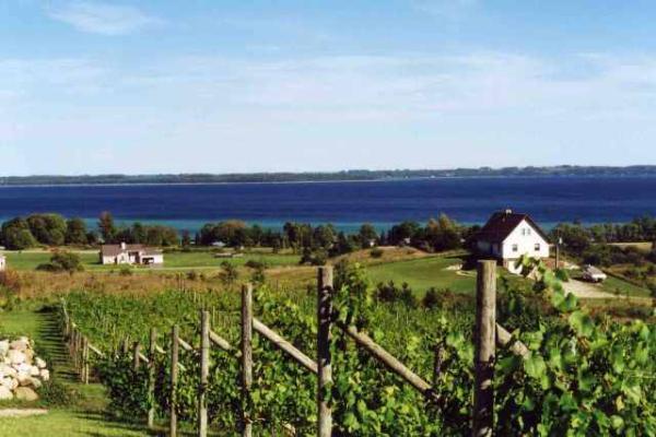 SuttonsBay_vineyard2