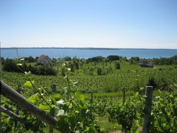 SuttonsBay_vineyards