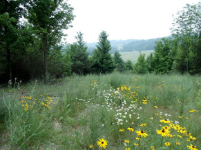 The Preserves of Leelanau, Lot 7, Northport