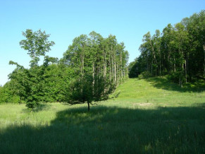 The Preserves of Leelanau, 7702 N Gerber Drive, Lot 5
